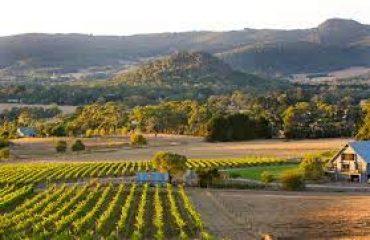 Macedon Vineyard